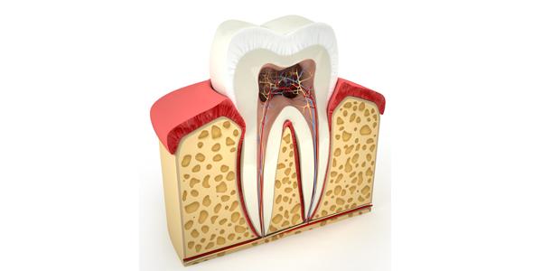 endodontie traitement de canal